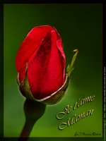 to_une-rose-rouge-pour-maman &