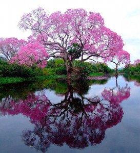 L'arbre de l'impératrice